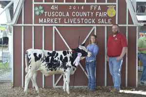 14-Grand-Champion-Dairy-Feeder-Tuscola-County-Fair-Parks-Show-Cattle