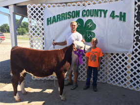 14-Grand-Champion-Feeder-Calf-Harrison-County-4H-Dayton-Brown