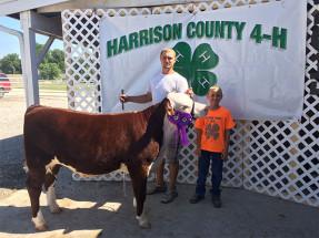 14-Grand-Champion-Feeder-Calf-Harrison-County-4H-Dayton-Brown