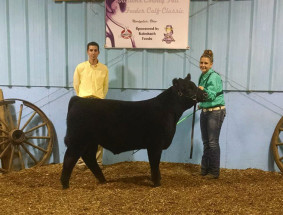 14-Grand-Champion-Feeder-Steer-Willas-County-Fall-Classic-McKenna-Shull