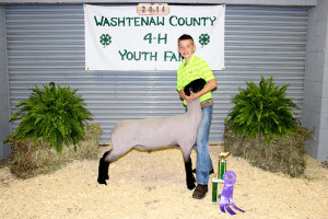 14-Grand-Champion-Individual-Market-Lamb-Washtenaw-County-Fair-Max-Wagner