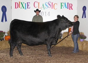 14-Grand-Champion-Jr-Commercial-Heifer-Dixie-Classic-Fair-Catherine-Harward