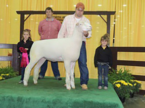 14-Grand-Champion-Jr-Preview-Dorset-Missouri-Dorset-Preview-Show-Taylor-Crouch