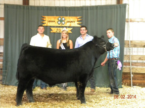 14-Grand-Champion-Logan-County-Jr.-&-Open-Shows-Brandon-Hickey