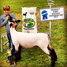 14-Grand-Champion-Market-Ewe-Richwood-Independent-Fair-Morgan-Evans