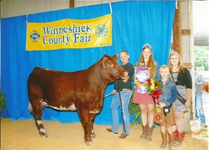 14-Grand-Champion-Market-Heifer-Winneshiek-County-Fair-Elizabeth-Garcia-Holly