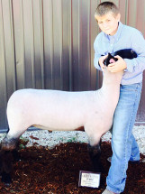 14-Grand-Champion-Market-Lamb-Calhoun-County-Fair-Bryce-Clayton