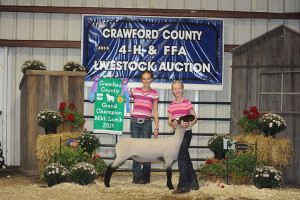 14-Grand-Champion-Market-Lamb-Crawford-County-Fair-Madalyn-Rankin