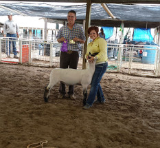 14-Grand-Champion-Market-Lamb-Morton-County-Fair-Dandi-Thomas