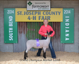 14-Grand-Champion-Market-Lamb-St-Joseph-County-Fair-Taylore-Haseley