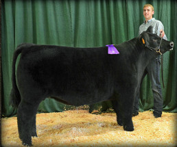 14-Grand-Champion-Market-Steer-Arkansas-Valley-Fair-Jakob-Juul