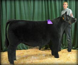 14-Grand-Champion-Market-Steer-Arkansas-Valley-Fair-Jakob-Juul