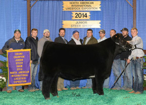 14-Grand-Champion-Market-Steer–NAILE-Brennen-Meert