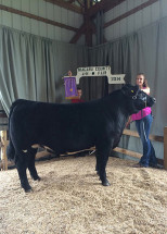 14-Grand-Champion-Market-Steer-Niagara-County-4H-Show–Elzabeth-Luckman
