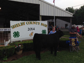 14-Grand-Champion-Market-Steer-Shelby-County-Fair-Kennedy-Lawson