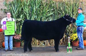 14-Grand-Champion-Market-Steer-Tuscarawas-County-Fair-Brock-Zwick