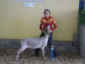14-Grand-Champion-Overall-Dairy-Market-Goat-Highland-County-Show-Cheyenne-Watson