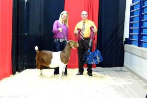 14-Grand-Champion-Percentage-Doe-Overall-Keystone-International-Livestock-Expo-Cheyenne-Corley