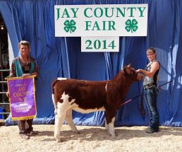 14-Grand-Champion-Prospect-Heifer-Jay-County-4H-Fair-Lizzy-Schoenlein