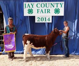 14-Grand-Champion-Prospect-Heifer-Jay-County-4H-Fair-Lizzy-Schoenlein