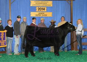 14-Grand-Champion-Simmental-Heifer-NAILE-Meghan-Reed