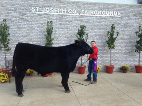 14-Grand-Champion-Steer-&-Champion-County-Breed-St-Joseph-County-Grange-Fair-Andrew-Littlefield