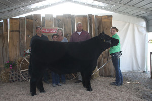 14-Grand-Champion-Steer-Defiance-Couty-Fair-Ashley-Peter