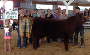14-Grand-Champion-Steer-Jackson-County-4H-Matthew-Nierman