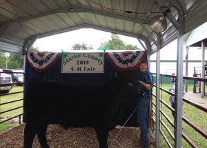 14-Grand-Champion-Steer-Starke-County-4H-Fair-Mason-Awald