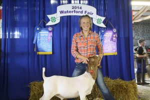 14-Grand-Champion-Waterford-Fair-Morgon-Donnell
