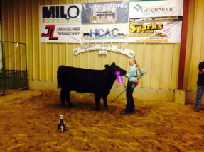 14-Overall-Champion-Breeding-Stock-Hillsdale-County-Youth-Fair-Jordan-Stump