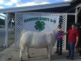 14-Overall-Grand-Champion-Steer-Harrison-County-Fair-Brian-hayse