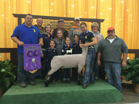 14-Overall-grand-Champion-Hampshire-Ewe-NAILE-Emily-Overs