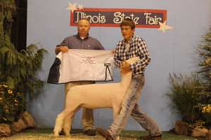 14-Reserve-Champion-Dorset-Illinois-State-Fair-Colin-Stark