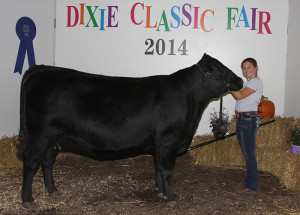 14-Reserve-Champion-Jr-Angus-Heifer-Dixie-Classic-Fair-Marcie-Harward