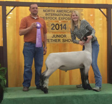 14-Reserve-Champion-Shropsire-NAILE-Renee-Sivertson