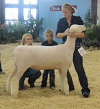 14-Reserve-Champion-Slick-Seared-Jr.-Land-of-Lincoln-Illinois-State-Fair-Alexandra-Ruwe