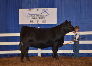 14-Reserve-Division-4—Southeastern-Regional-Jr-Limousin-Show-Cooper-Henderson