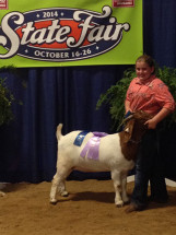 14-Reserve-Grand-Champion-Percentage-Yearling-Doe-NC-State-Fair-Olivia-Daughtridge
