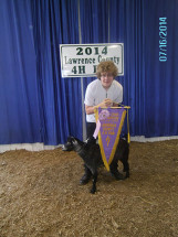 14-Reserve-Grand-Champion-Pygmy-Wether-Lawrence-County-4H-Fair-Zach-Prince