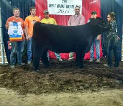 14-Reserve-Grand-Champion-The-Great-Darke-County-Fair-Cheyanne-Bowman