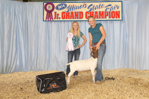 14-Reserve-Light-Weight-Wether—Illinois-STate-Fair-Open-Show-Skylynn-Oopen-Show