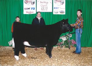 14-Reserve-Overall-Crossbred-Heifer-Ohio-BEST-Program-Points–Jordan-Johnson