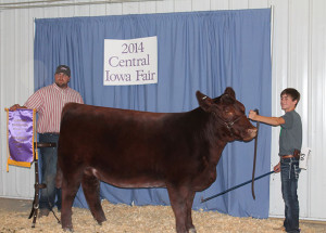 14-Supreme-Champion-Breeding-Heifer-Central-iowa-Fair-Jarrin-Goecke