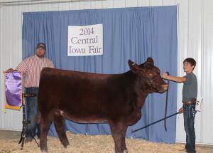 14-Supreme-Champion-Breeding-Heifer-Central-iowa-Fair-Jarrin-Goecke