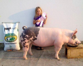 14-Supreme-Champion-Gilt-Overall-Peoria-County-4H-Show-Taylor-Catton