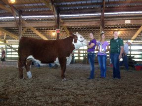 14-Supreme-Champion-Heifer-Monroe-County-Fair-Melinda-Braun