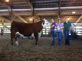 14-Supreme-Champion-Heifer-Monroe-County-Fair-Melinda-Braun