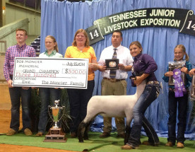 14-Supreme-Grand-Champion-Commercial-Ewe-Tennessee-Jr-Sheep-Exposition-Brooklyn-Ellis