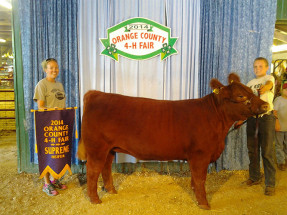 14-Supreme-Heifer-Orange-County-4H-Fair-Remington-Allen